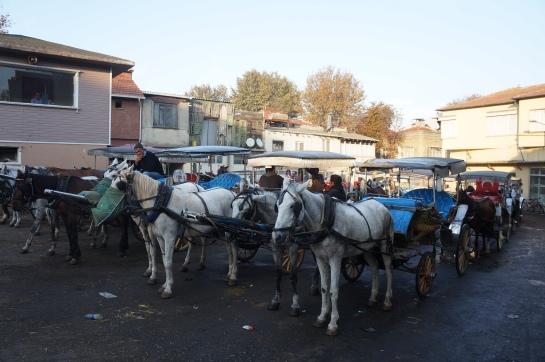 parcare de cai