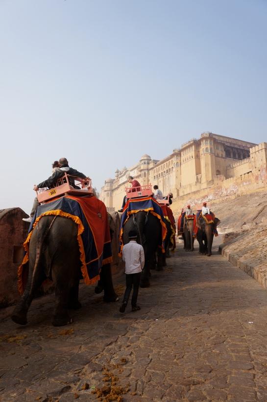 cu elefantu la fort amer