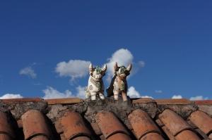 vaci pe acoperisul incins Cuzco